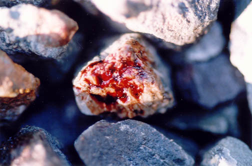 photo of stones stained with Precious Blood